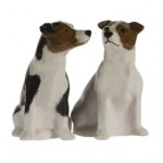Smooth Jack Russell Salt and Pepper
